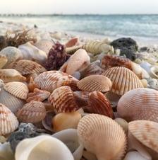 Blog - Sharon Krause - Seashalls - image