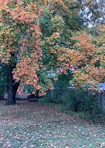 Blog - Sharon Krause - True Colors - CP - 100120