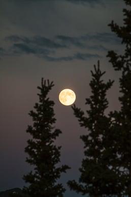 Blog- Charles Paolino - Moonstruck_image